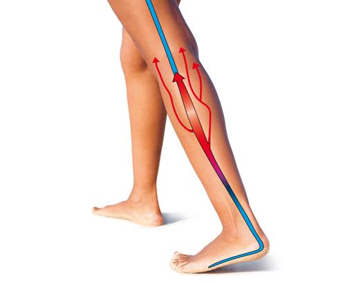 Illustrations jambes circulation sanguine